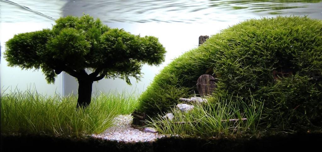 The Hobbit Aquarium